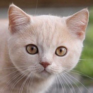 cropped-un-gato-bebe-433.jpg