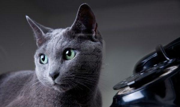 gato-marca-emergencia
