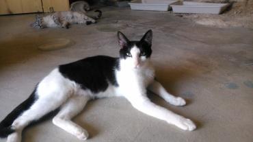 Luna es una gatita joven cariñosa y muy bonita, convive con el resto de gatos de nuestra protectora. Situación veterinaria al día.